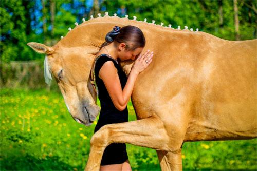 Healing Horse Store healing image