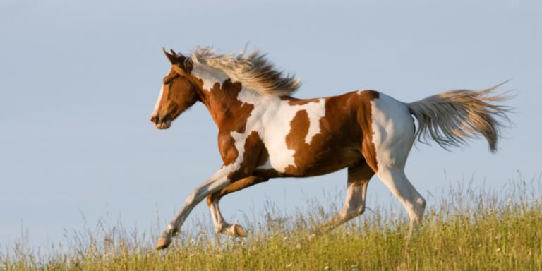 Heel mite free horse