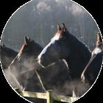 Logo of Horsemist Horse Sanctuary