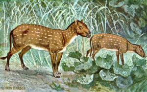 Myths and Misconceptions about Horses eohippus early horse