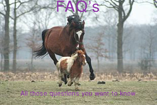 Frequently Asked Questions page horses
