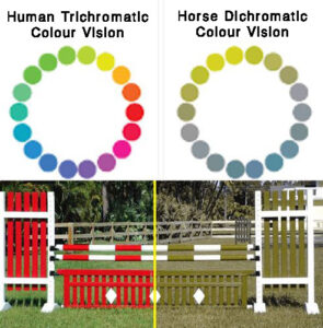 Myths and Misconceptions about Horses Differences between human and horses vision