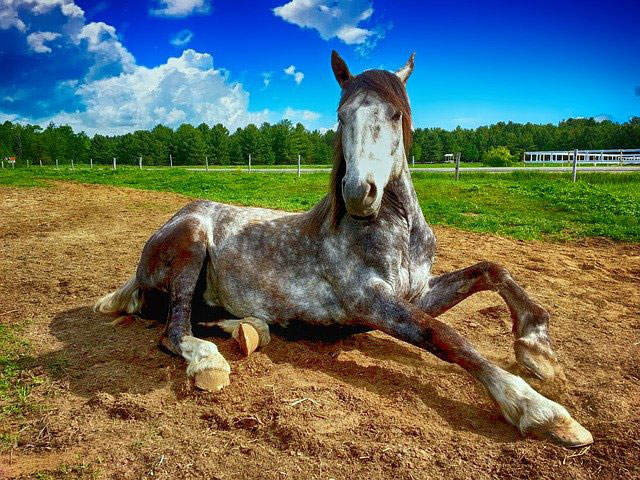 Myths and Misconceptions about Horses featured image